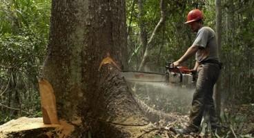 tallar un arbre